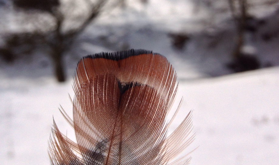 close-up of feather and snowy background